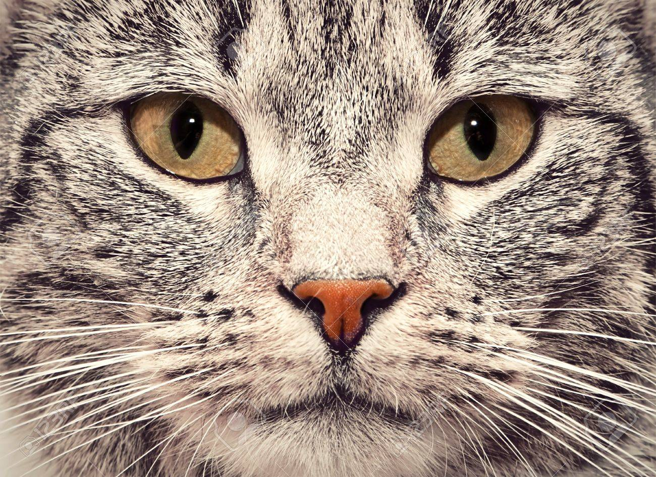 Cute Cat Face Close Up Portrait Looking Straight At The Camera