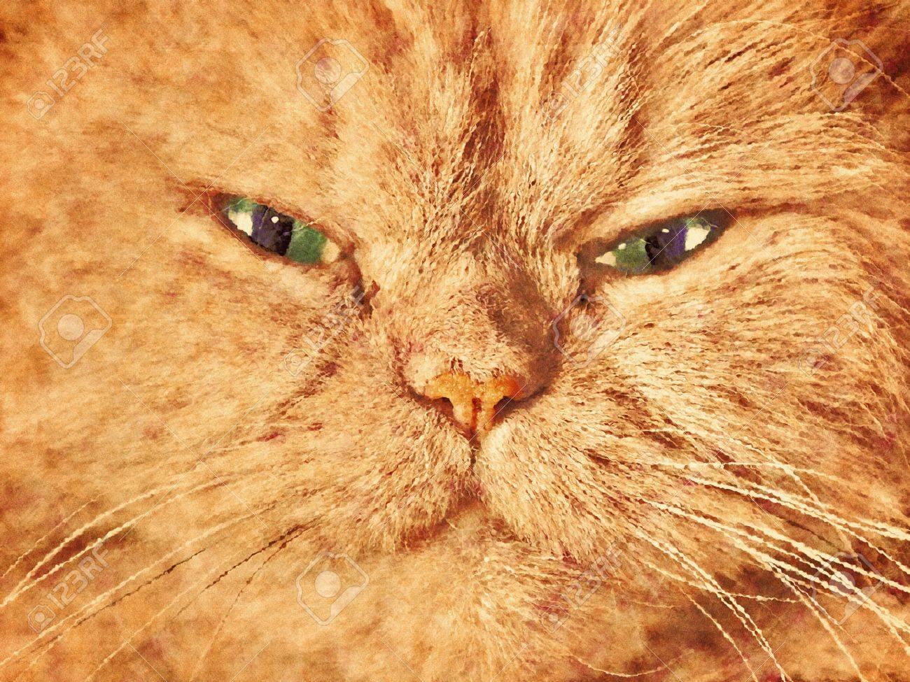 Cute Cat Face Close Up Portrait Painted Canvas Effect Stock