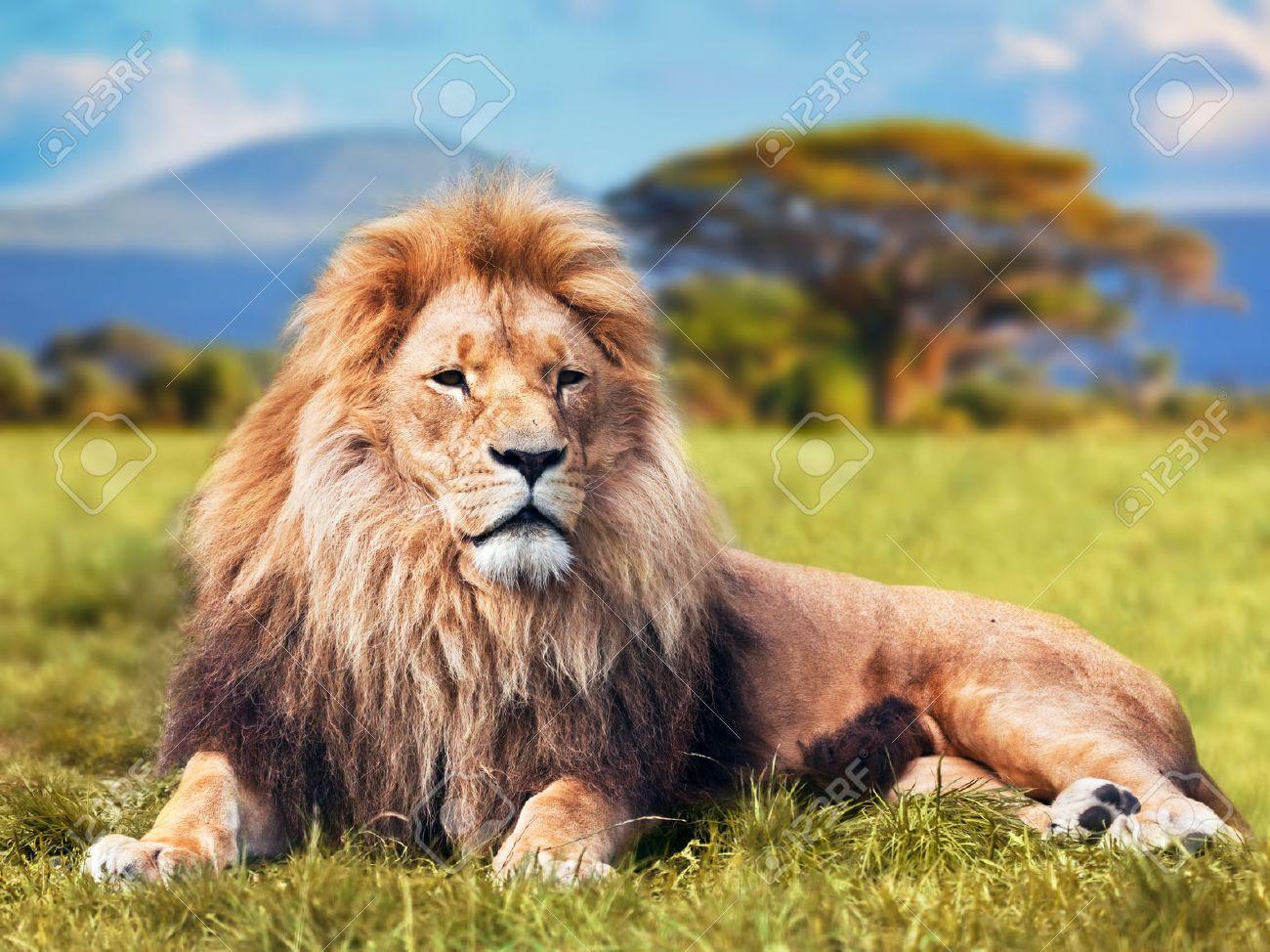 Sehr Tete De Lion Banque D'Images, Vecteurs Et Illustrations Libres De  ZB89