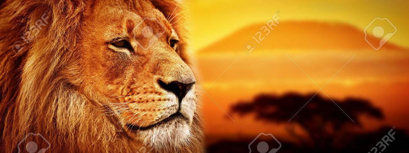 Lion portrait on savanna landscape background and Mount Kilimanjaro at sunset Panoramic version - 26507774