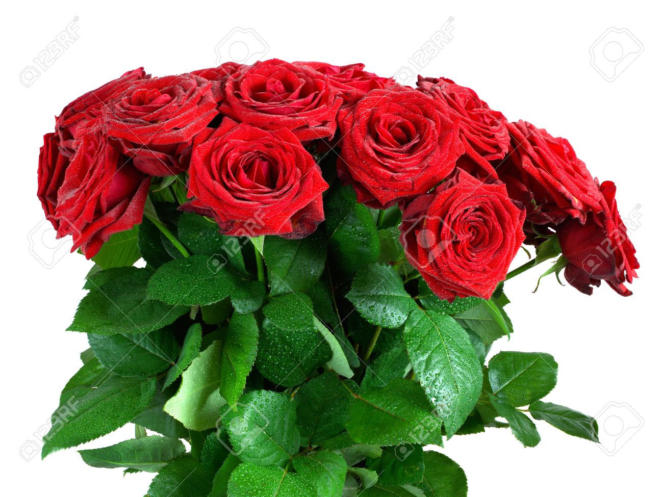 Red Wet Roses Flowers Bouquet Isolated On White Background. Great ...