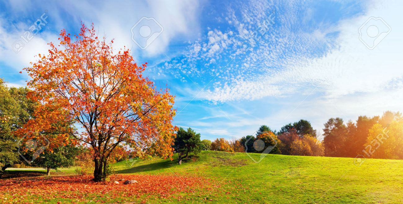 Autumn, Fall Landscape With A Tree Full Of Colorful, Falling Leaves, Sunny  Blue