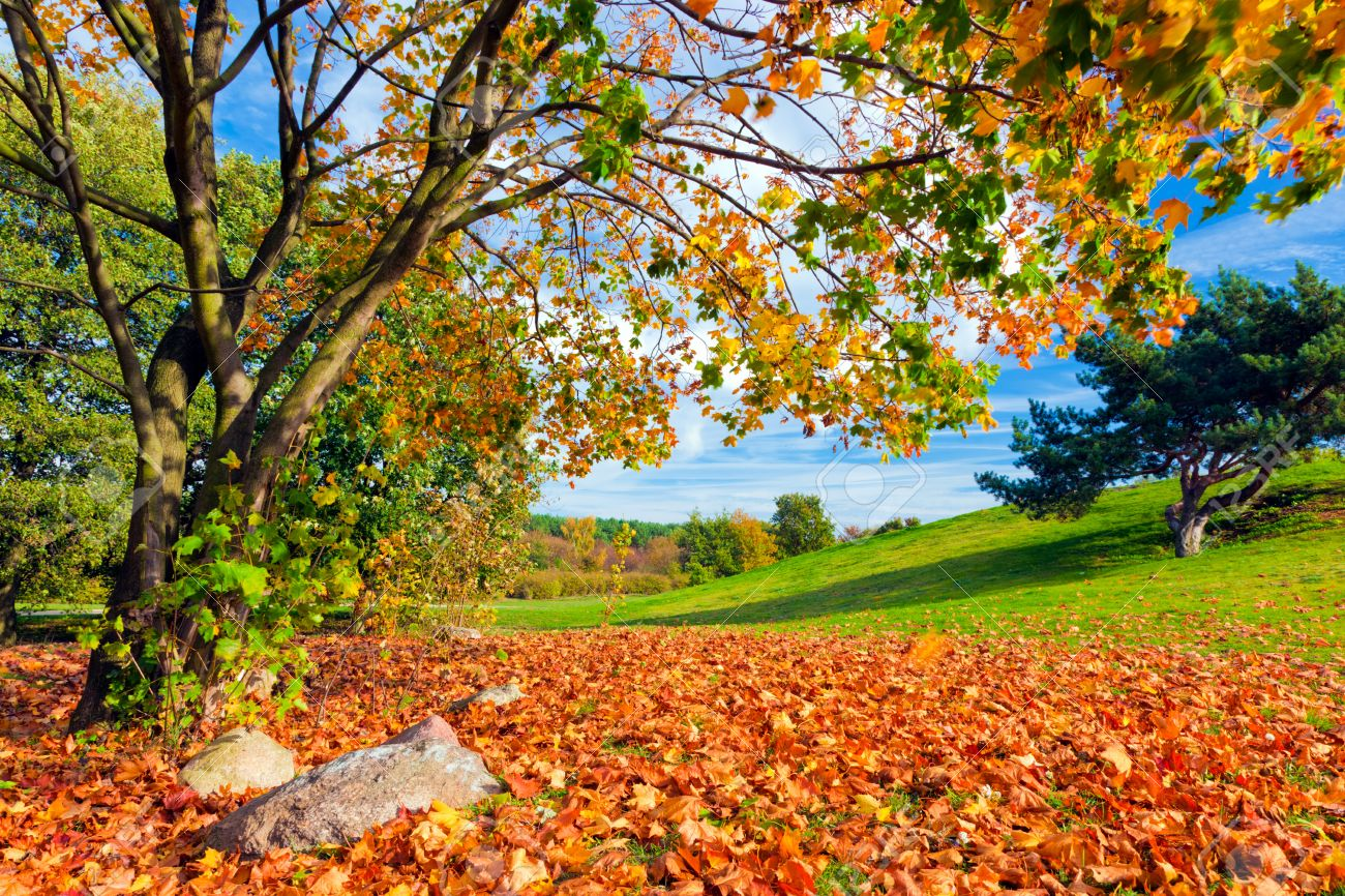 Fall Landscaping Garden Design Garden Design With Fall Landscape Checklist With