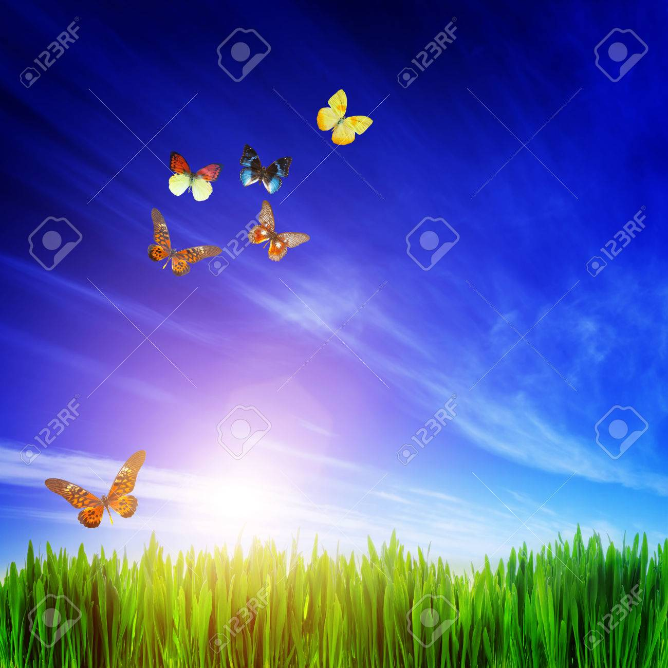 High Resolution Image Of Fresh Green Grass Flying Butterfly Stock Photo Picture And Royalty Free Image Image 34382764