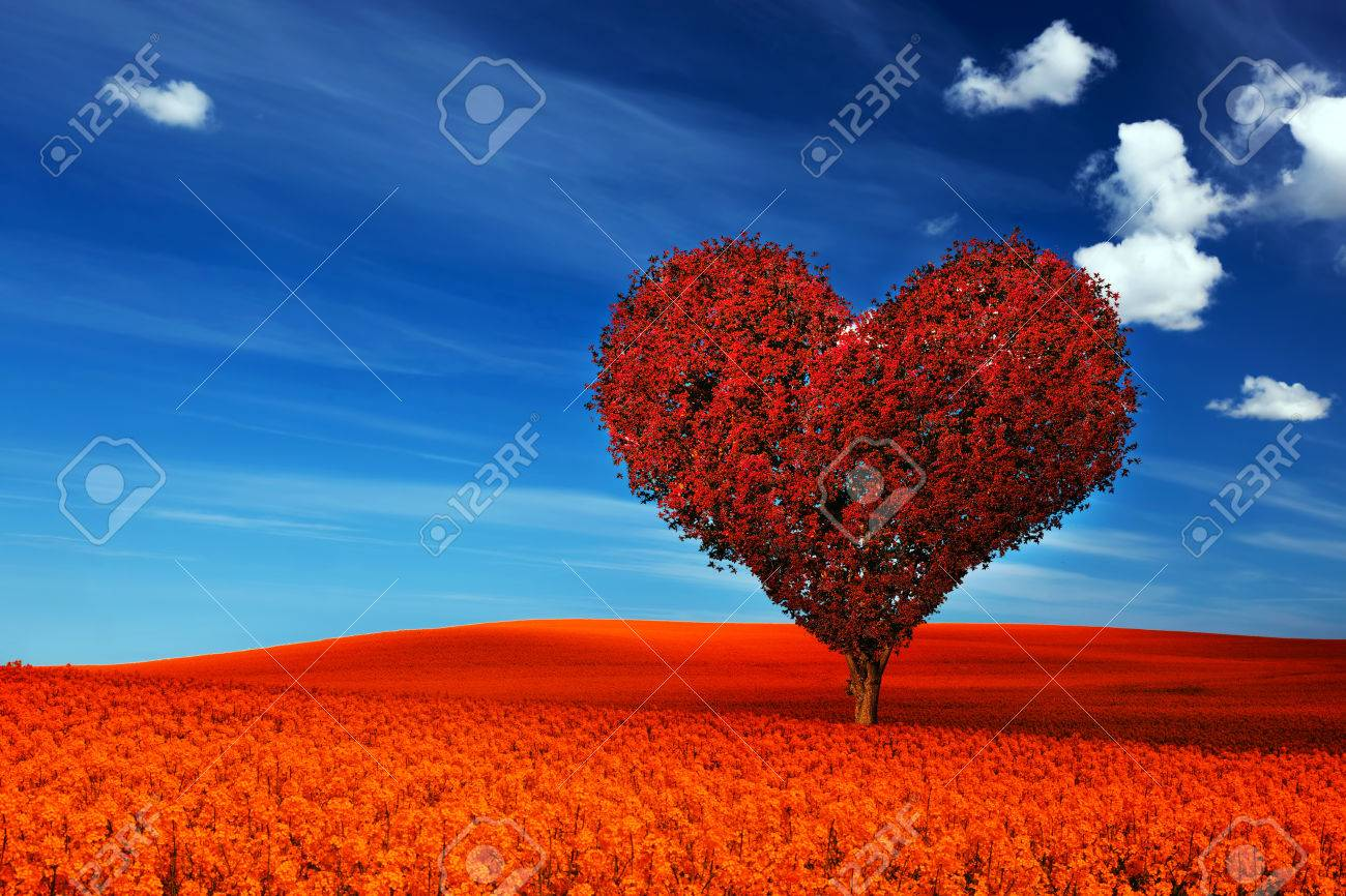 Corazón Forma De árboles Con Hojas Rojas En Campo De Flores De Color