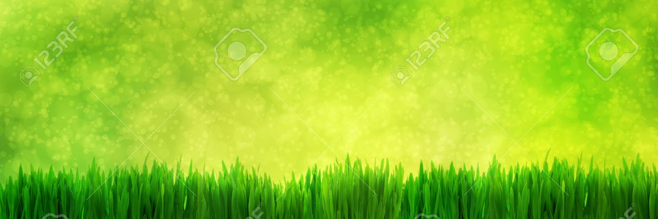 Fresh Green Grass Panorama On Natural Blur Nature Background Stock Photo Picture And Royalty Free Image Image 37915710
