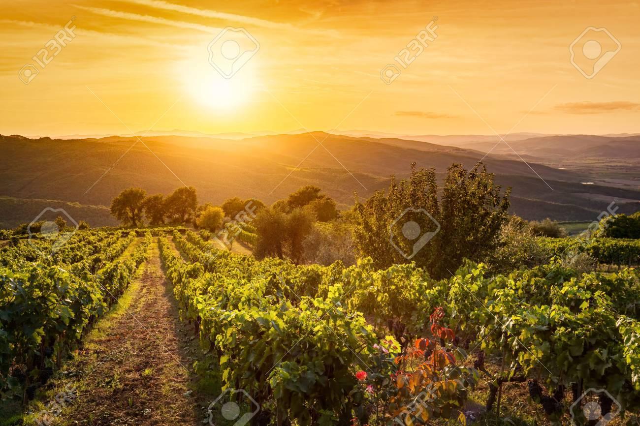 Vineyard wonderful landscape in Tuscany, Italy  Wine farm at