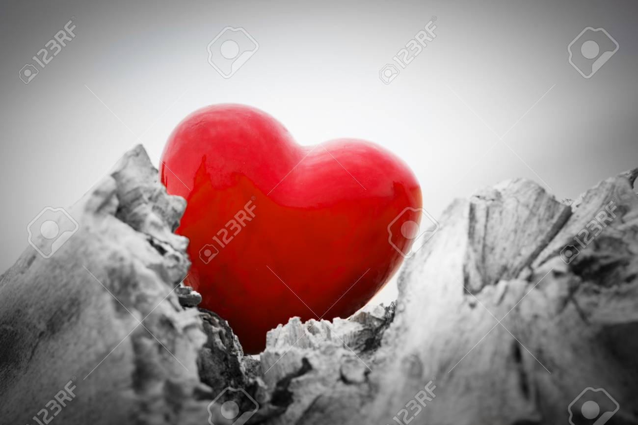 Red heart in a tree trunk and branches  Romantic symbol of love,