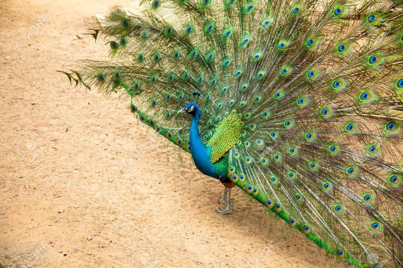 peacock dating who is hozier dating now
