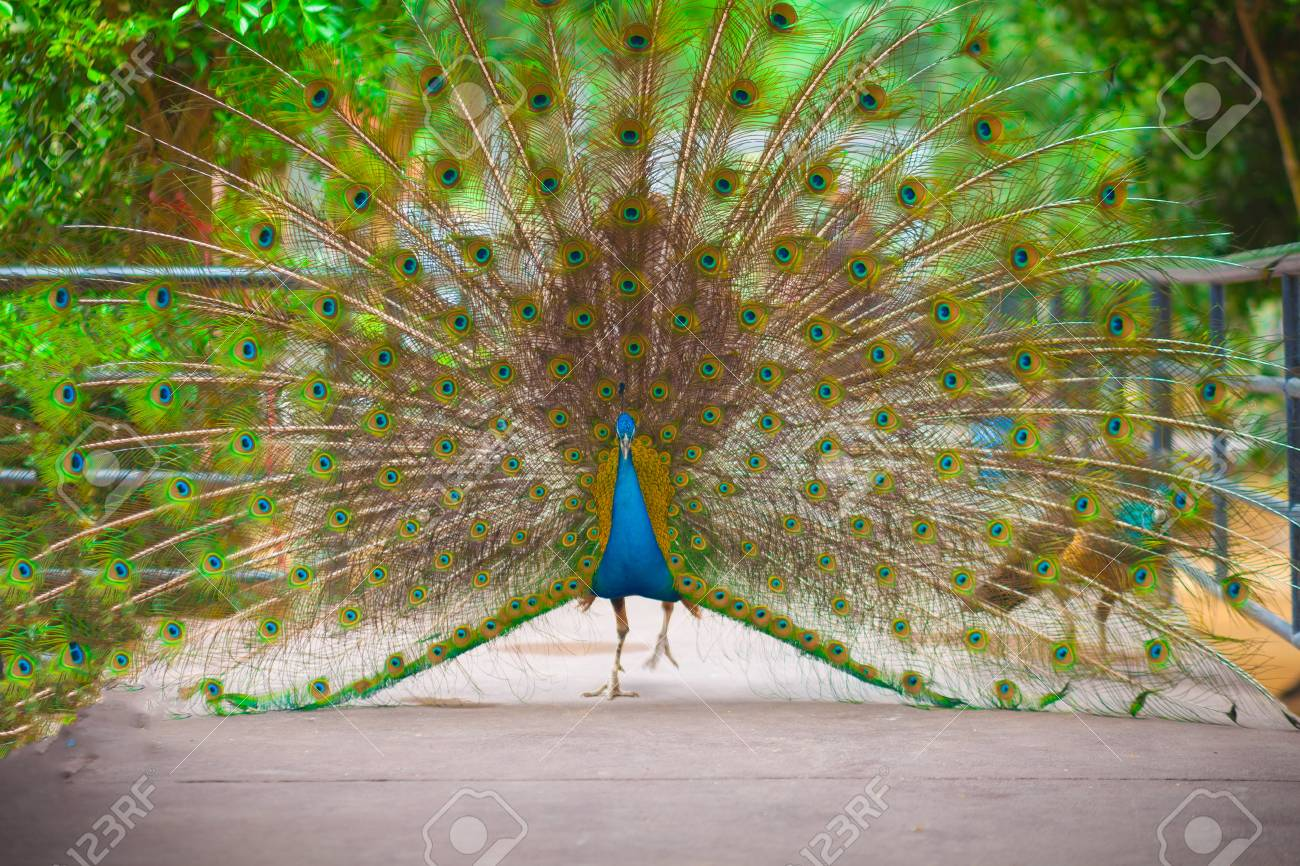 peacock dating dating counselling