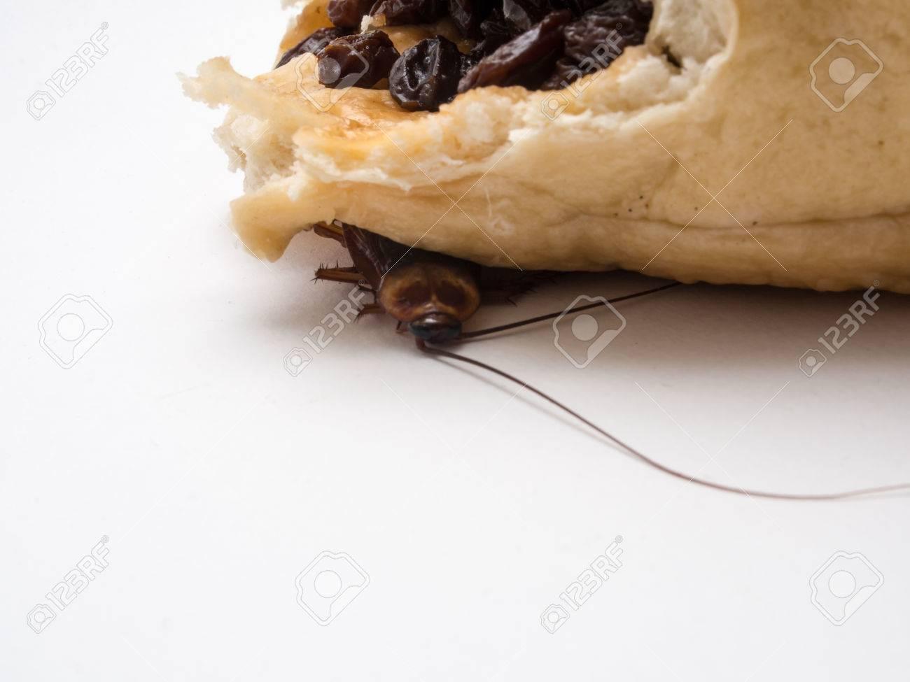 Blatte De Cuisine Photo les blattes sont porteurs de maladies que vous devez