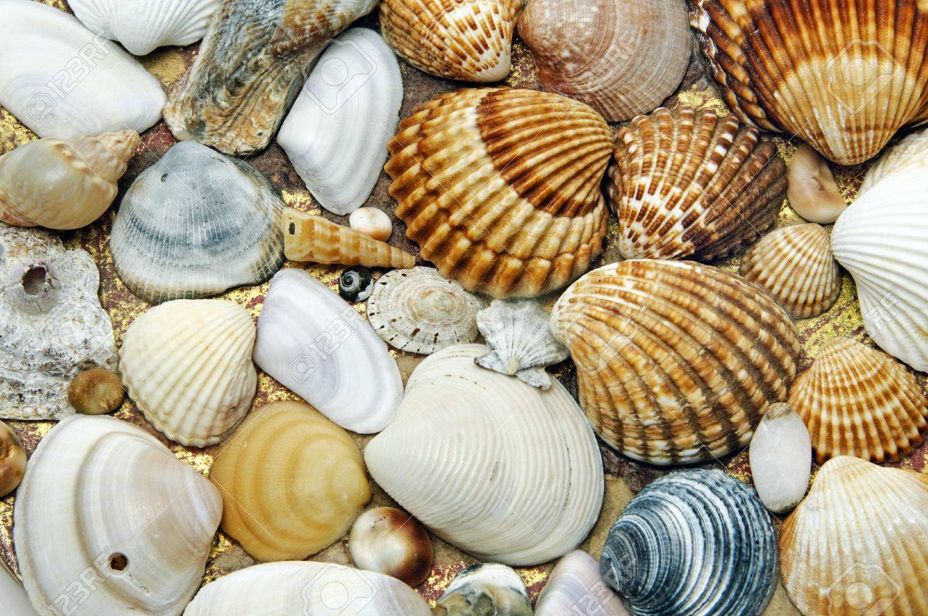 background made of a closeup of a pile of seashells on the sand Stock Photo - 6898261