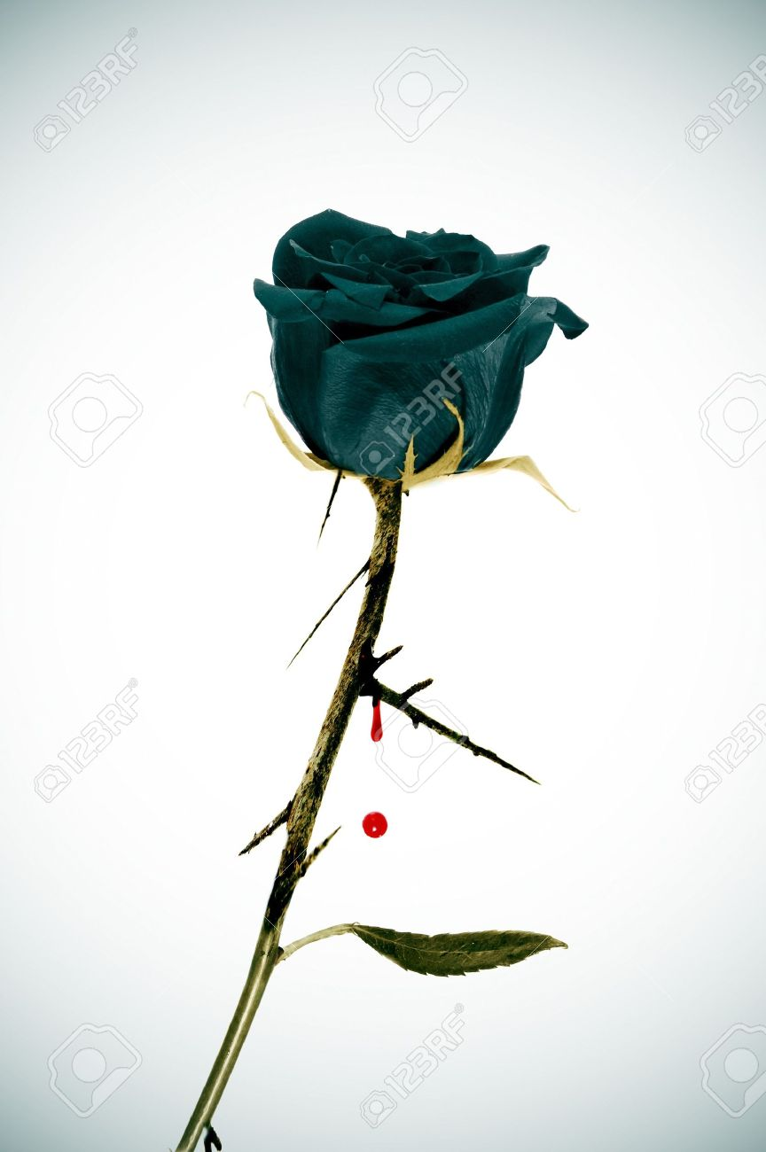 A Black Rose On An Emo Background With Blood Stock Photo Picture
