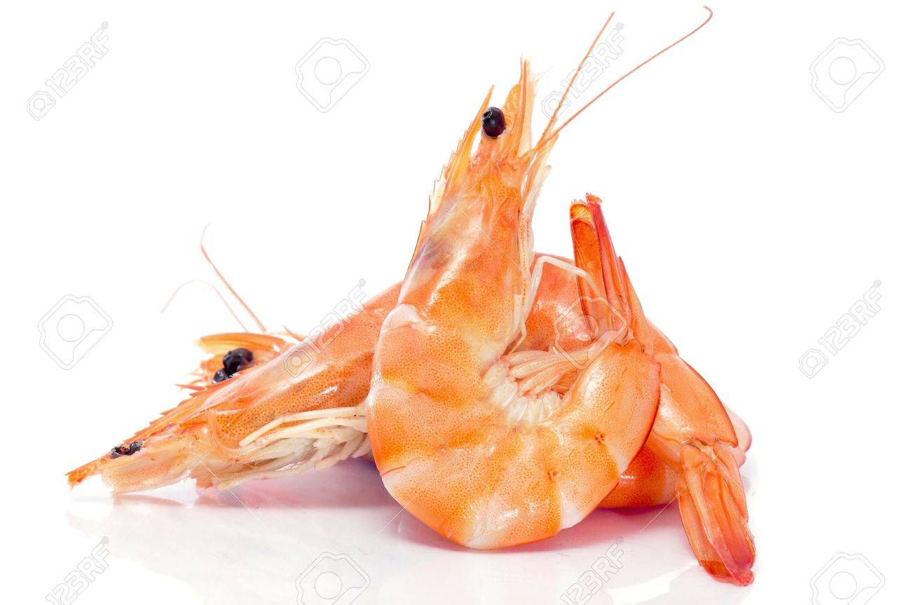 some shrimps on a white background - 9550320
