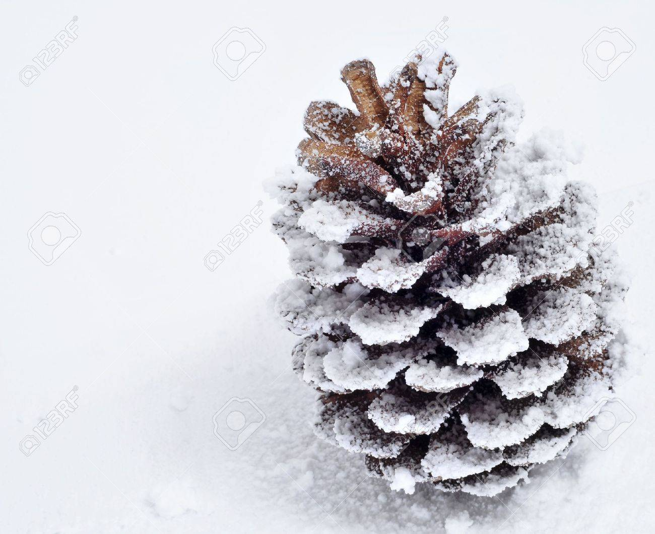 closeup of a pine cone on the snow Stock Photo - 9889123