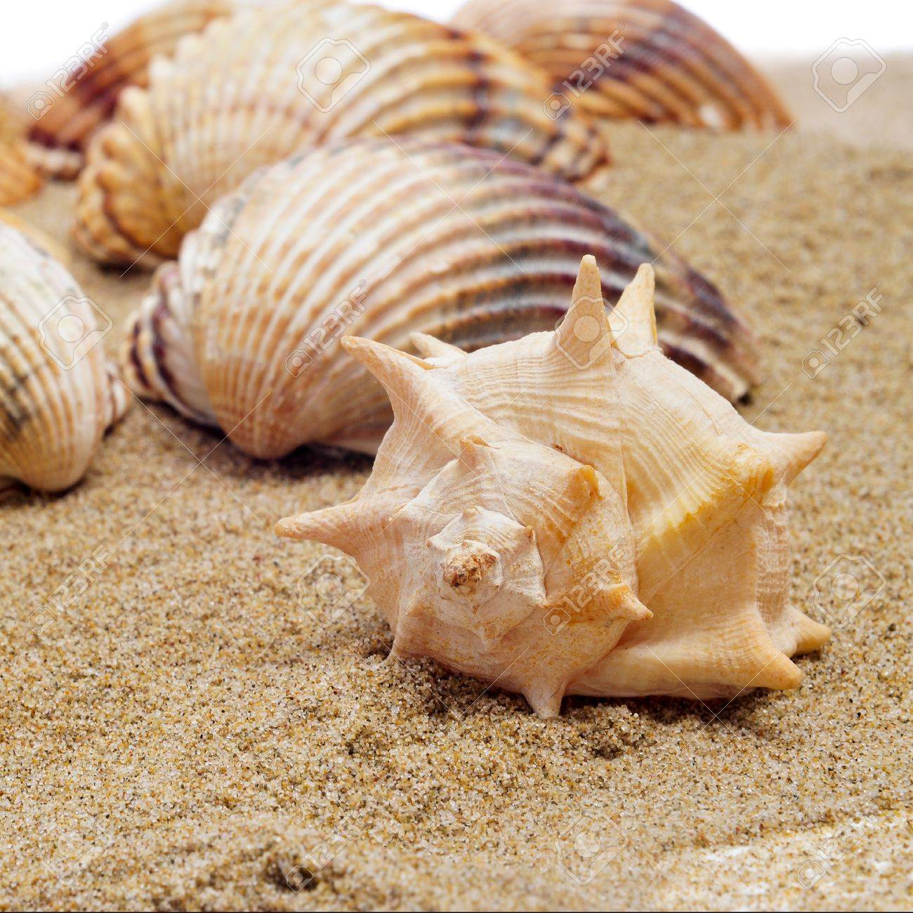 a pile of seashells on the sand Stock Photo - 11231897