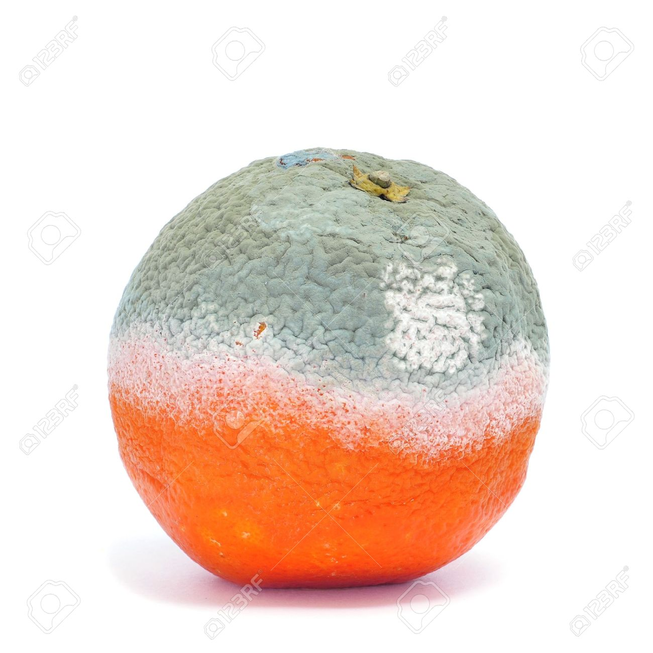 a moldy orange on a white background Stock Photo - 11996370