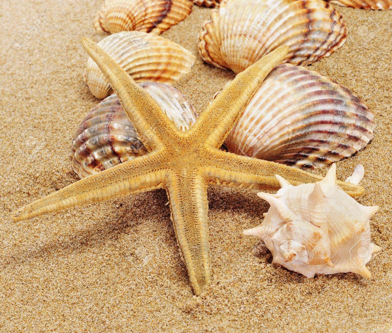 Un Monton De Conchas De Mar Y Una Estrella De Mar Sobre La Arena - Fotos-de-conchas-de-mar