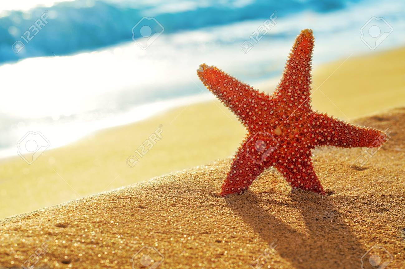 closeup of a seastar on a white sand beach stock photo picture and