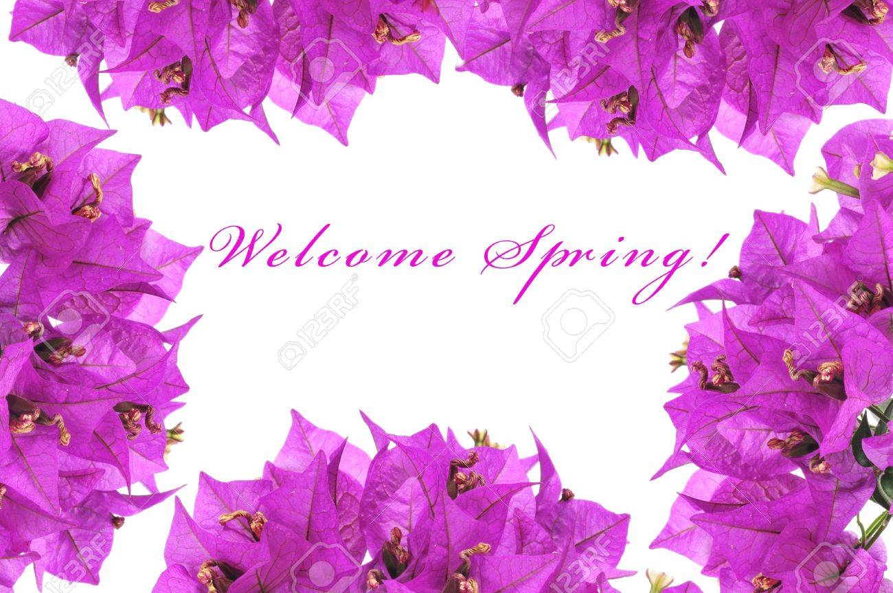 some bougainvillea flowers forming a frame and the sentence welcome spring written on a white background Stock Photo - 17681705
