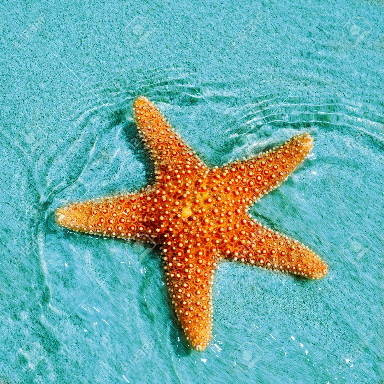 closeup of a seastar in a tropical beach stock photo picture and
