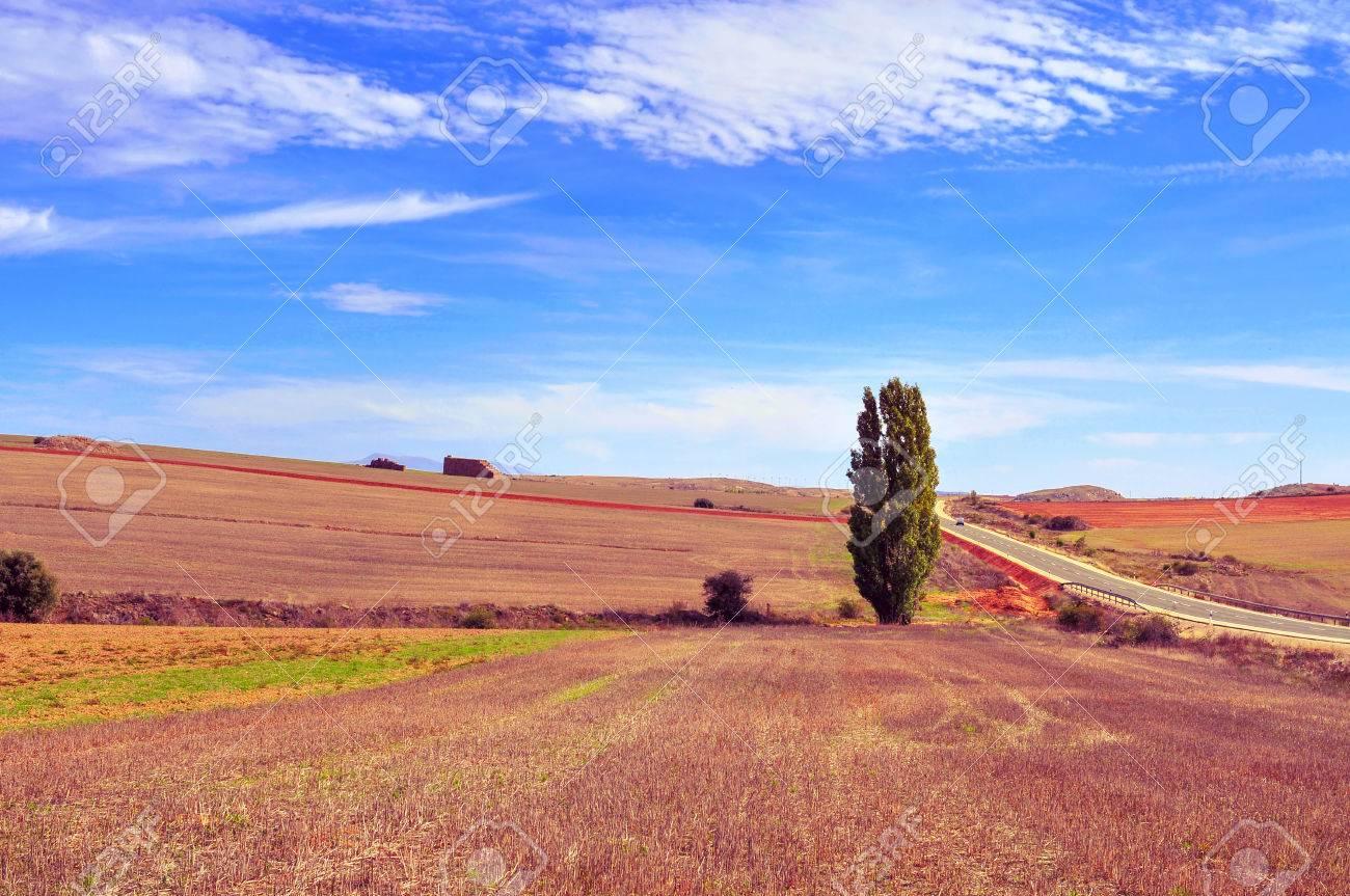 スペインのソリア県の畑風景の眺...
