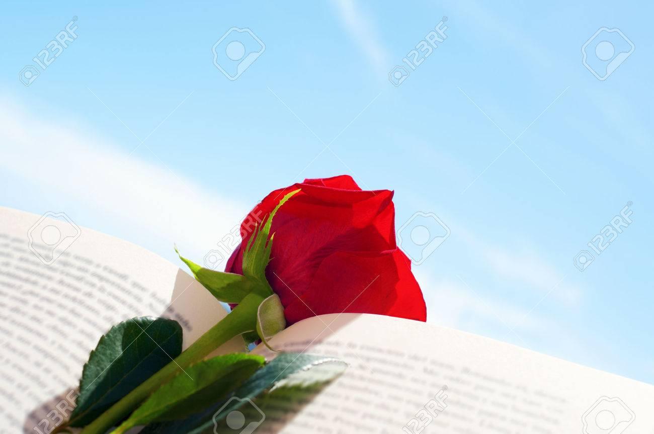 Primo Piano Di Una Rosa Rossa In Un Libro Aperto Per Sant Jordi Il