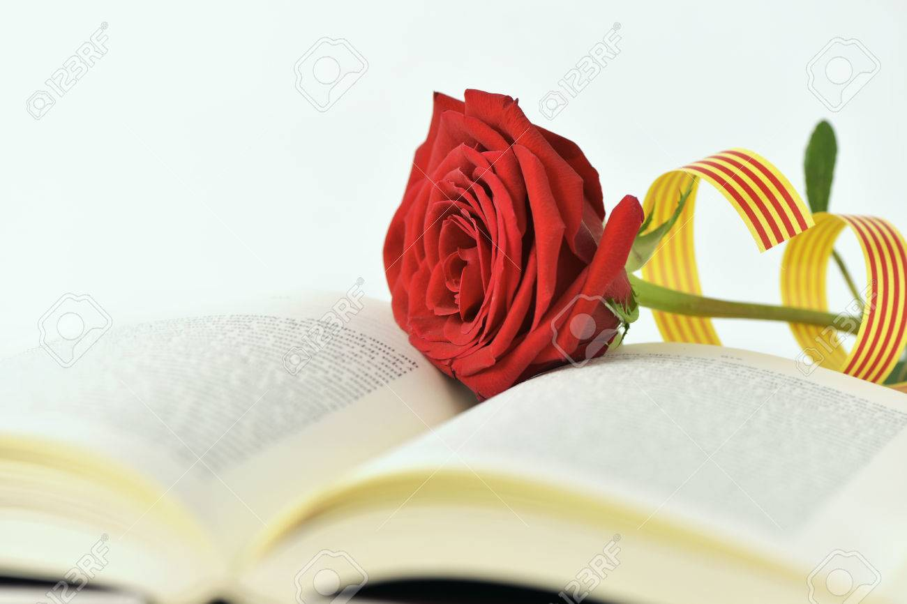 closeup of a red rose and a catalan flag in an open book for Sant Jordi, the Catalan name for Saint Georges Day, when it is tradition to give red roses and books in Catalonia, Spain - 75987496