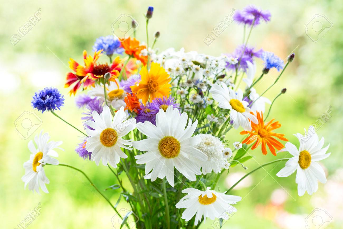 bouquet of summer flowers on green background stock photo picture