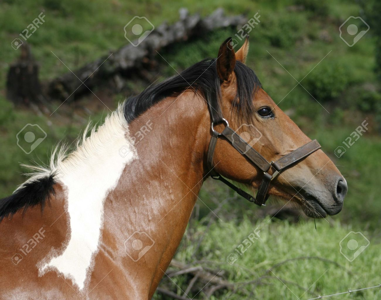 Painted Horse Head Side View Stock Photo Picture And Royalty Free Image Image 12899211