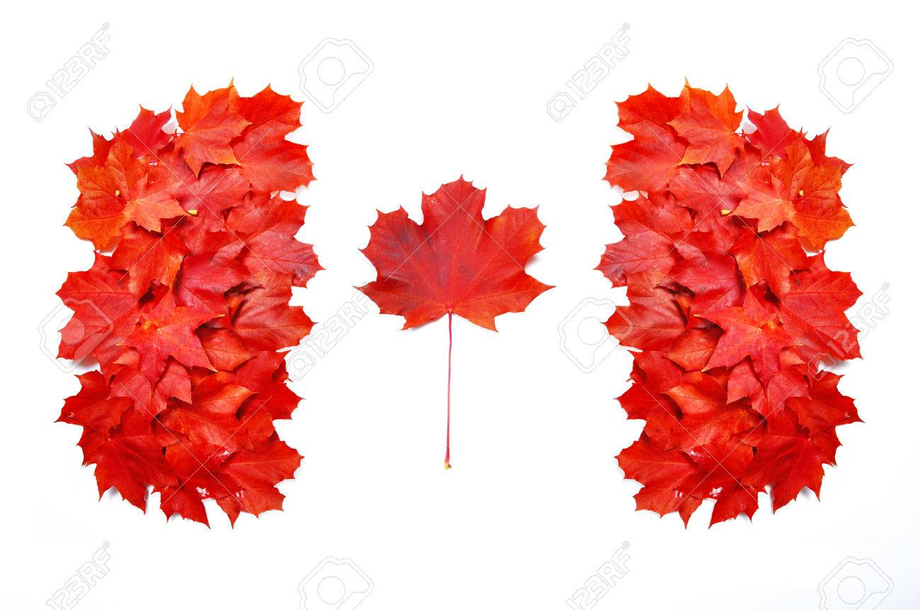 canadian flag made of red maple leafs stock photo picture and