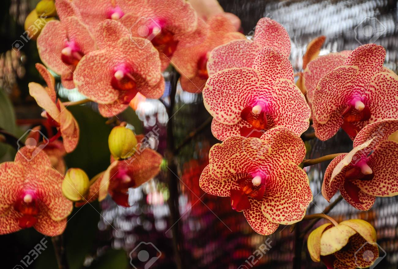 Colorful Tropical Exotic Orchids Flower In Plants Nursery Stock
