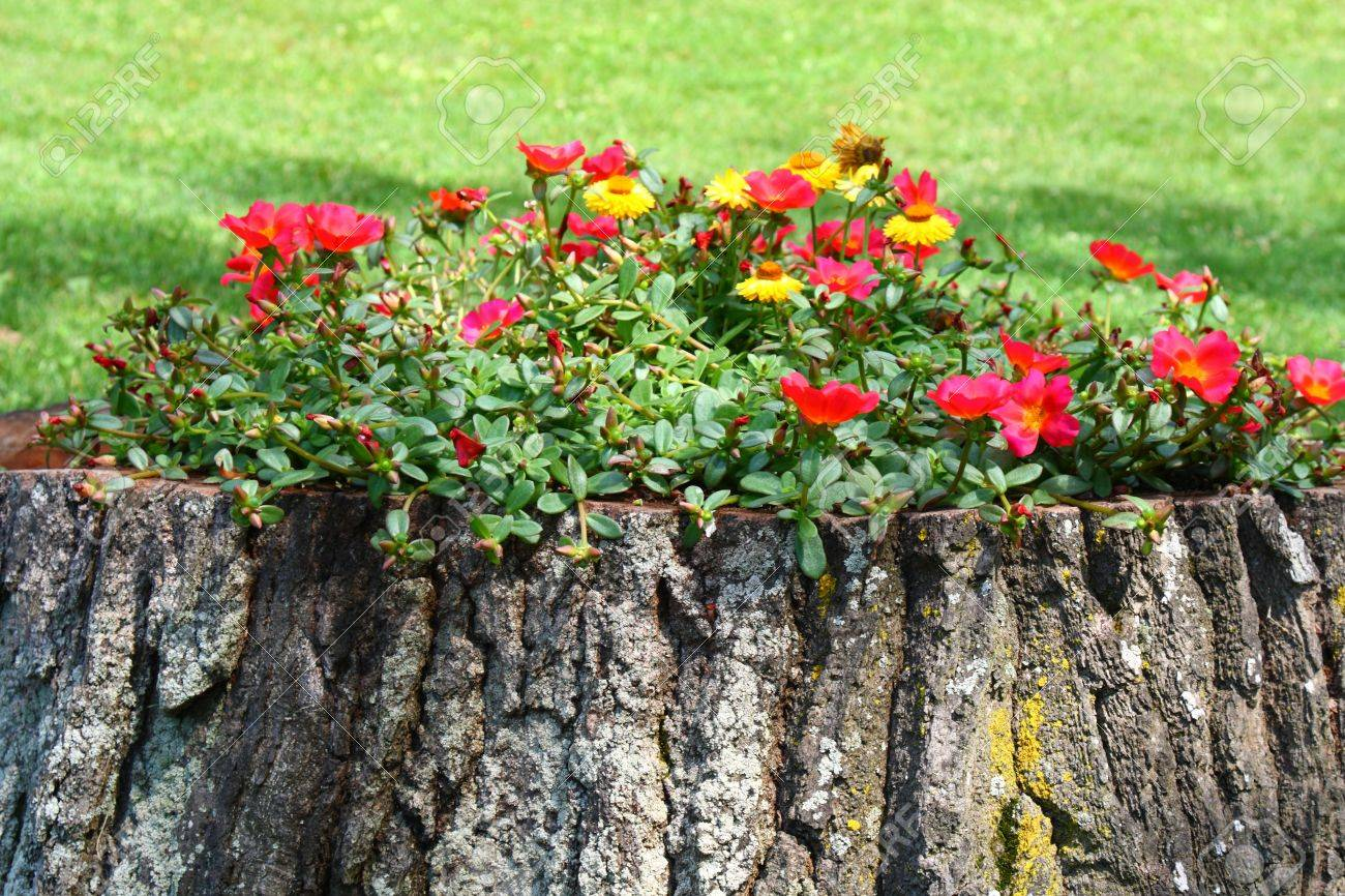 Old Tree Trunk Flower Pot Creative Gardening Stock Photo   11733117