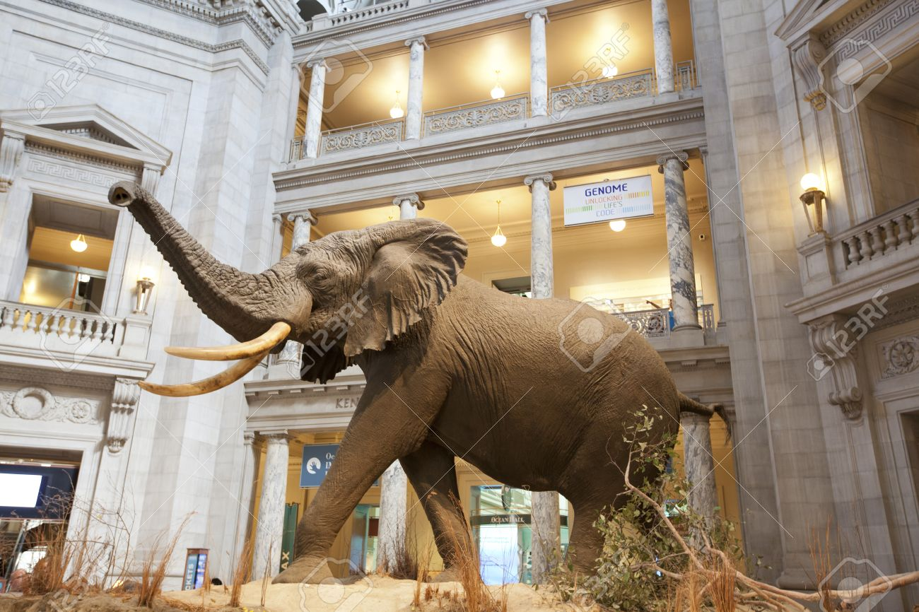 The National Museum of Natural History is a natural history museum administered by the Smithsonian Institution, located on the National Mall in Washington, D.C., United States. - 38714147
