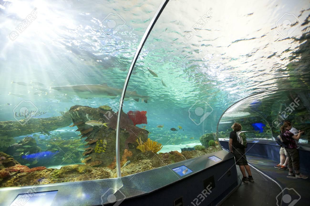 TORONTO- SEPTEMBER 15, 2014: Tourists admires the sharkl display tank at Ripleys Aquarium in Torornto on September 15, 2014. - 39701327