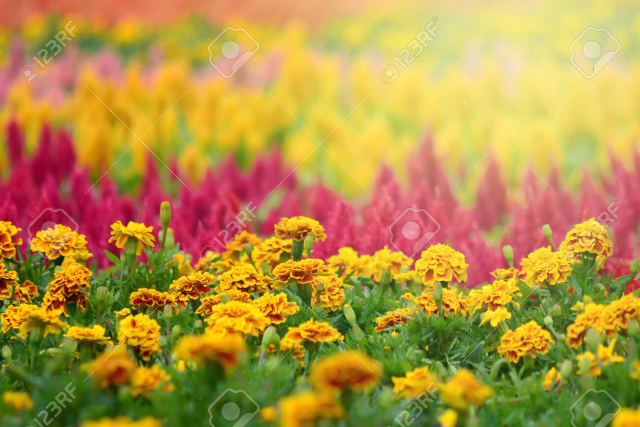 Colorful flowers in the garden - 144958225