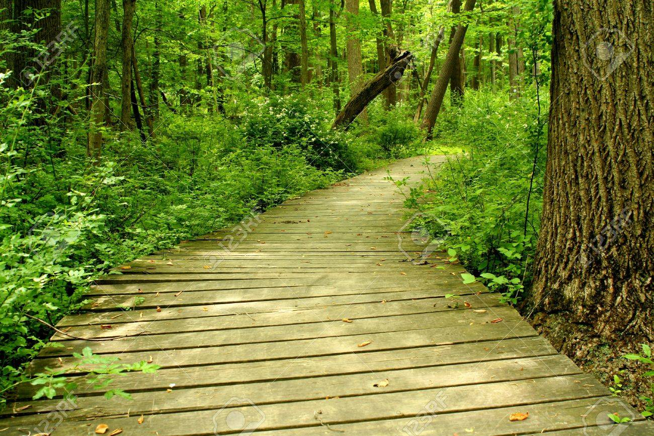 A Wooden bridge in the woods Stock Photo - 7063574