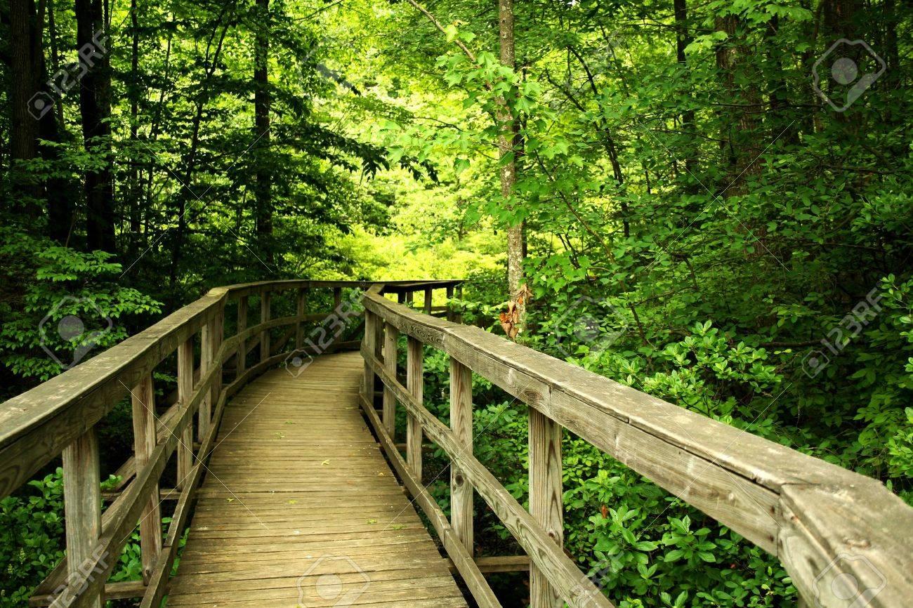a Wooden bridge through the forest - 9745598