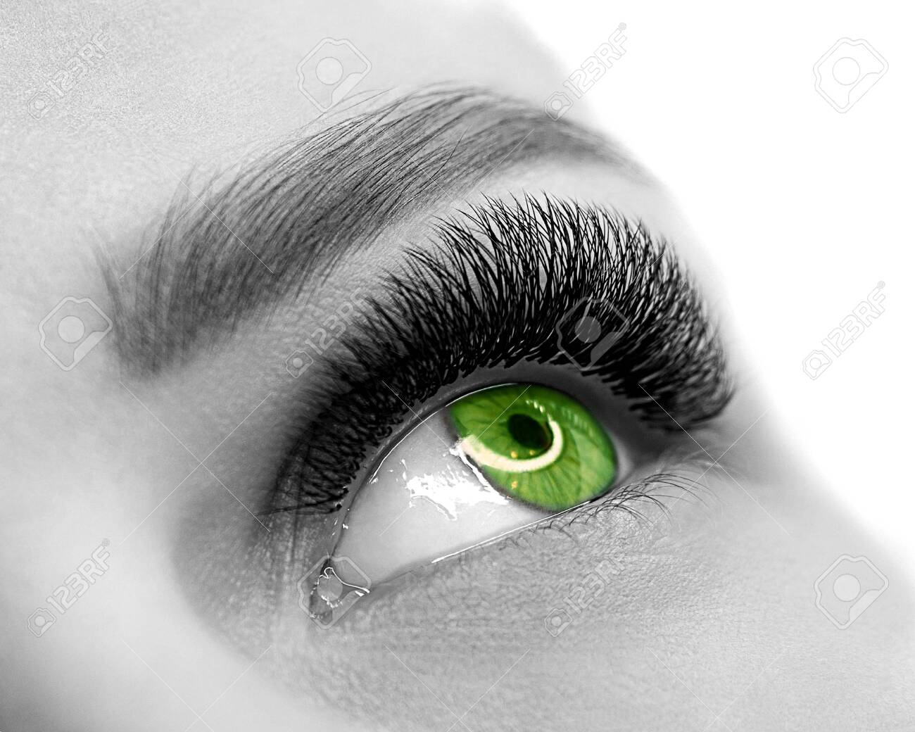 Open green eye of woman with eyelash extension. Well groomed skin, macro shot, black and white, close up, selective focus. - 131977245