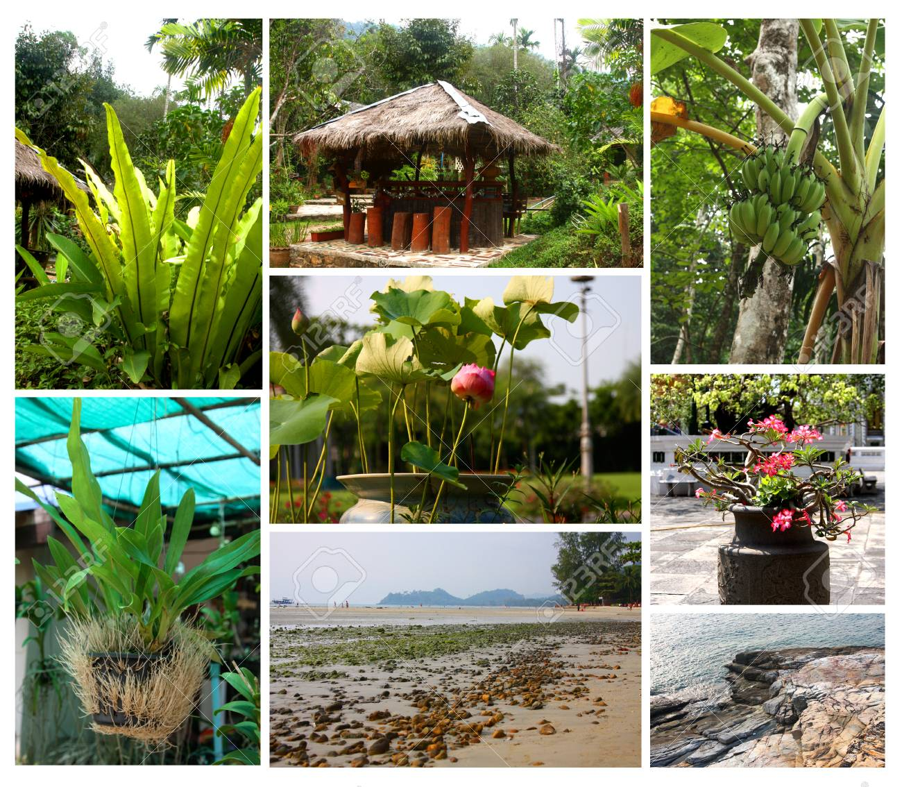 Set Of Backgrounds From Tropical Plants And Landscapes Photos