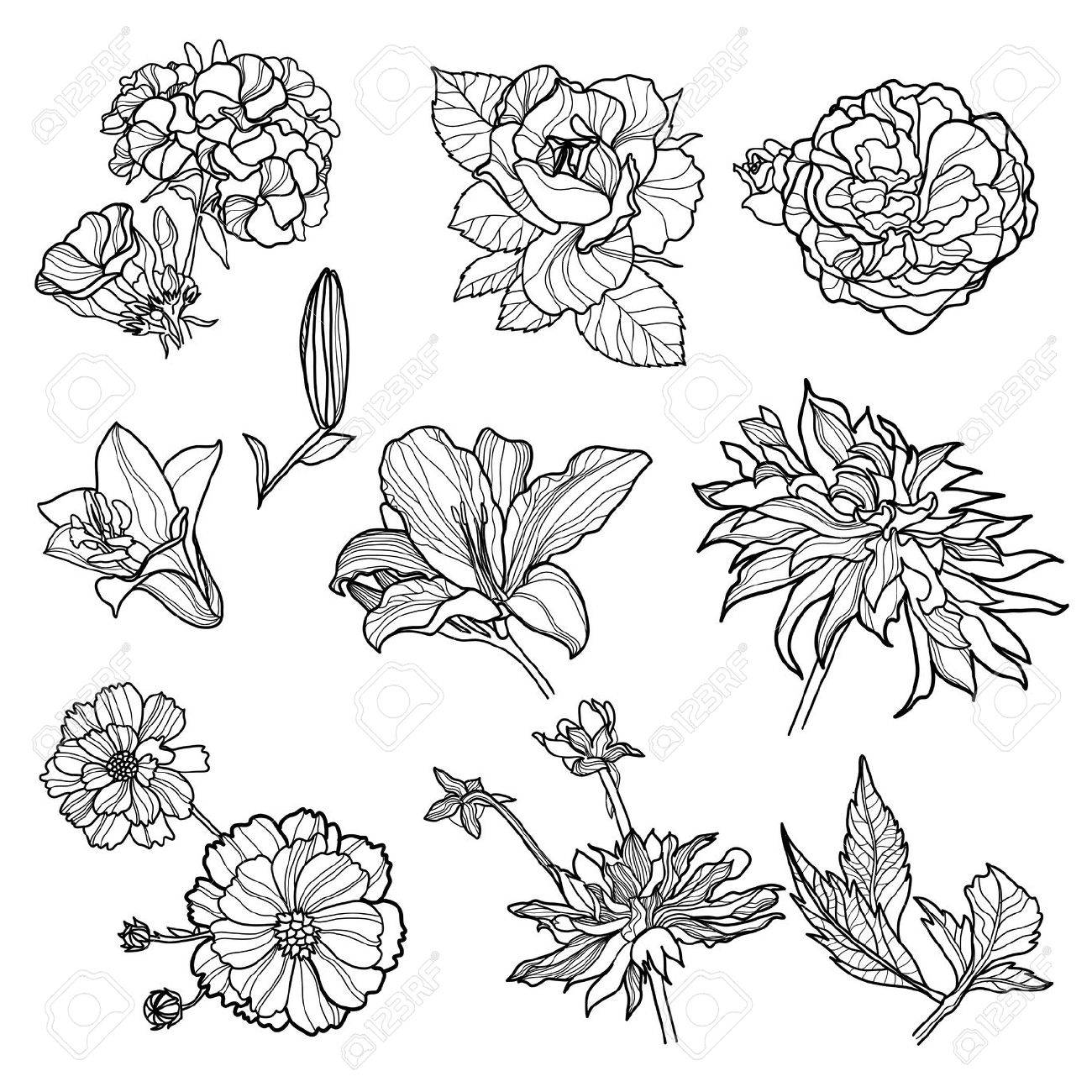 Set Of Black Floral Design Elements Sketches Of Flowers Stock