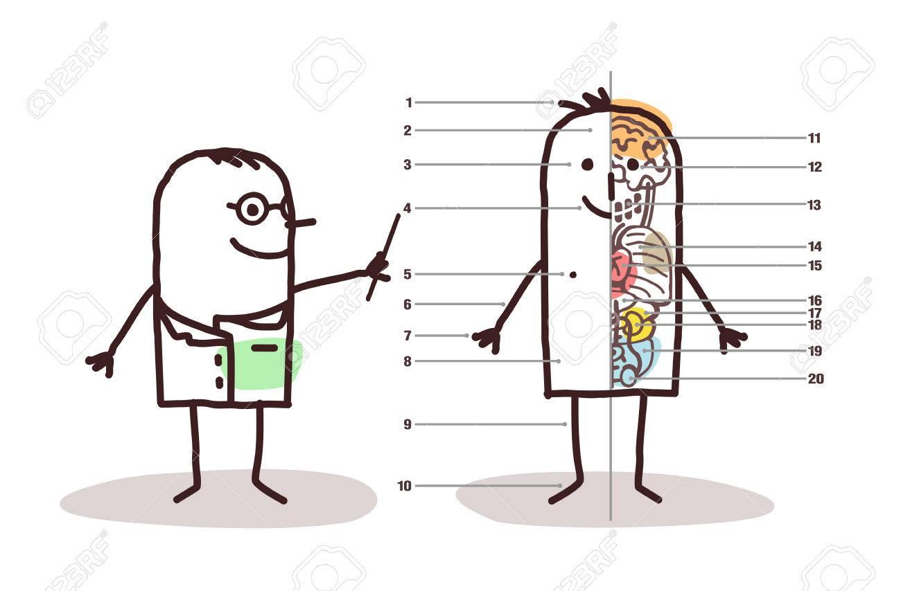 Lección De La Anatomía Masculina De Dibujos Animados Fotos, Retratos ...