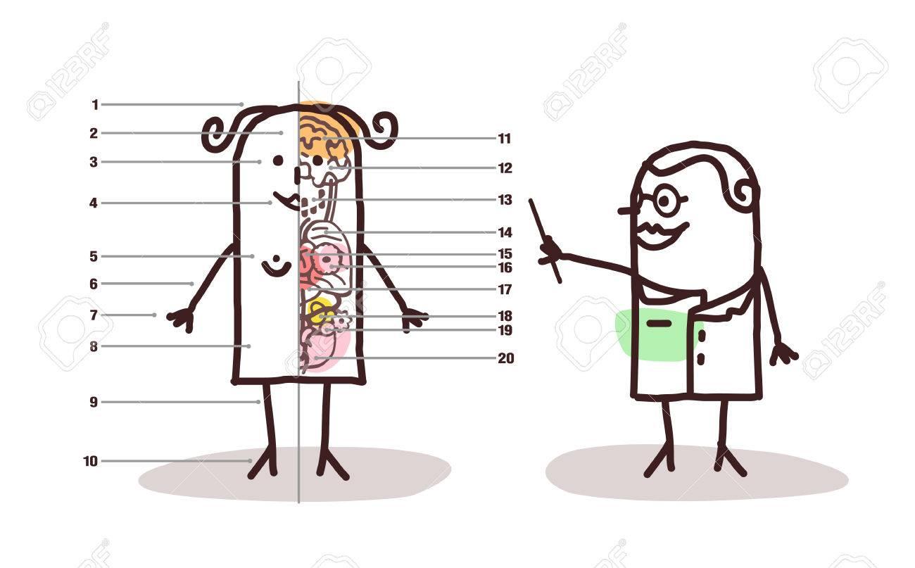Lección De La Anatomía Femenina De Dibujos Animados Fotos, Retratos ...