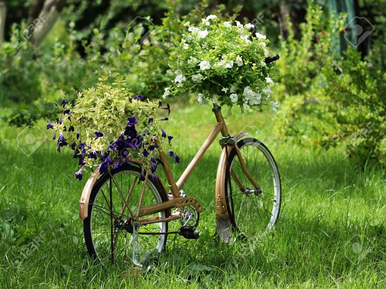 Stock Photo   Vintage Garden Bicycle