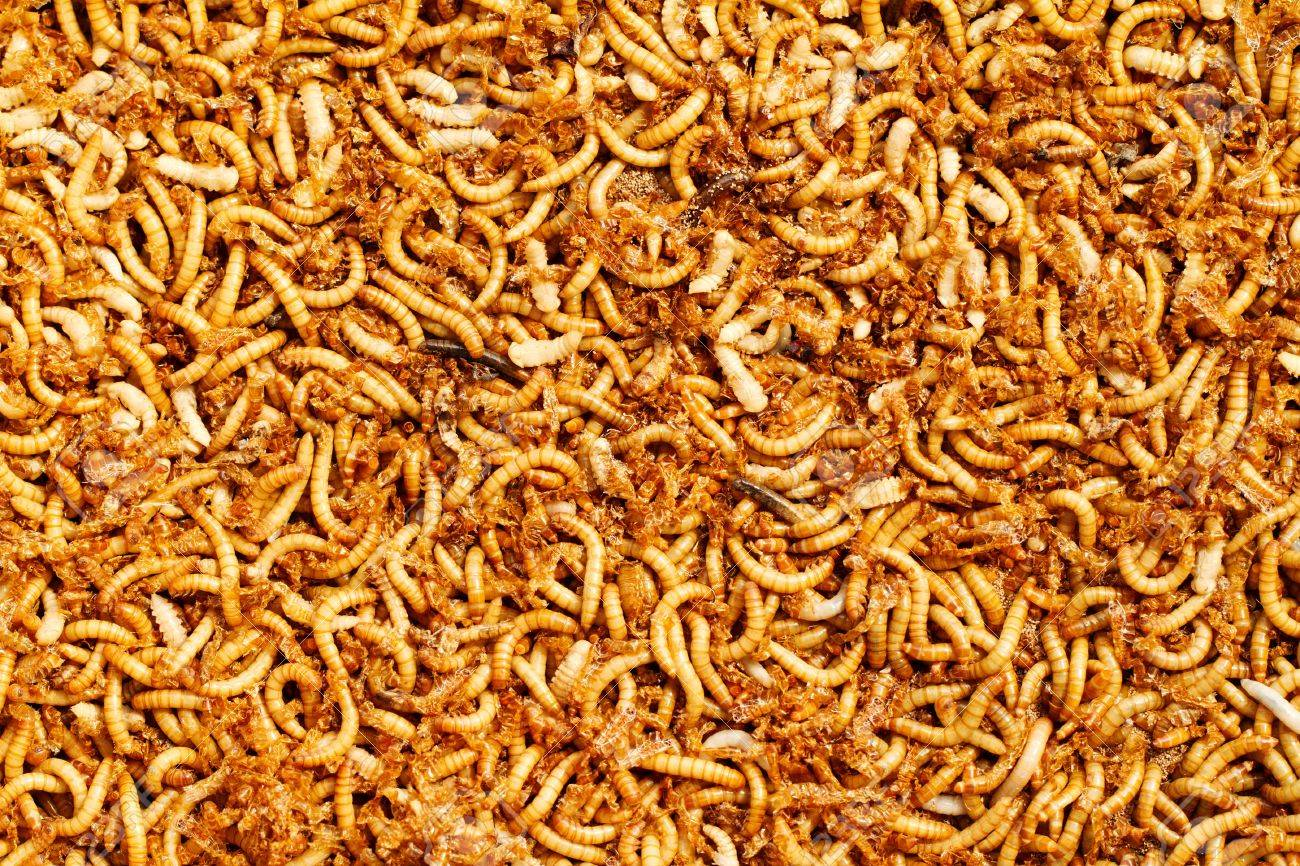many ugly worms as background Stock Photo - 17410251