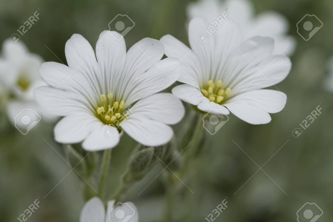 White rock flower garden edging Stock Photo - 21070452