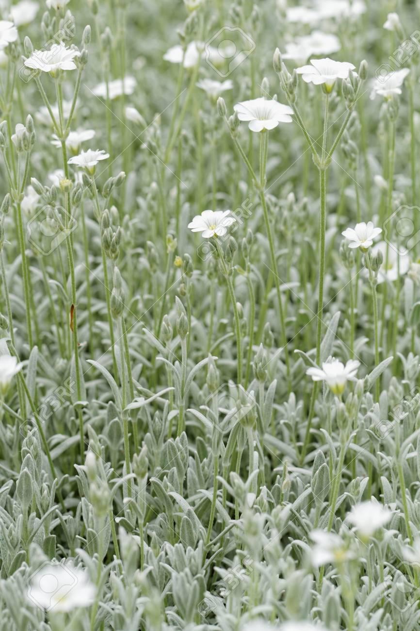 White rock flower garden edging Stock Photo - 21185591