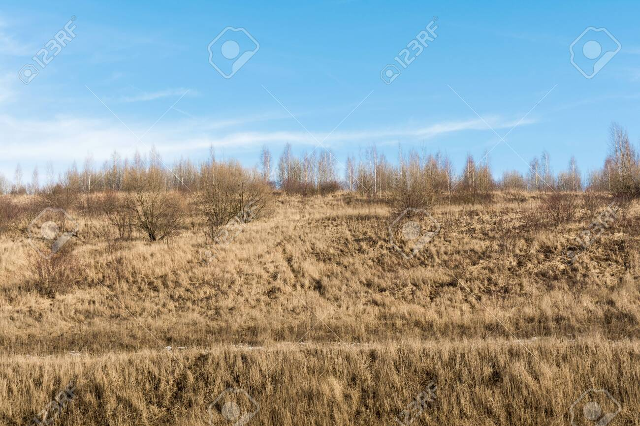 The hill with the dry grass with pine trees and birch trees on the blue skay with clouds background - 141875015