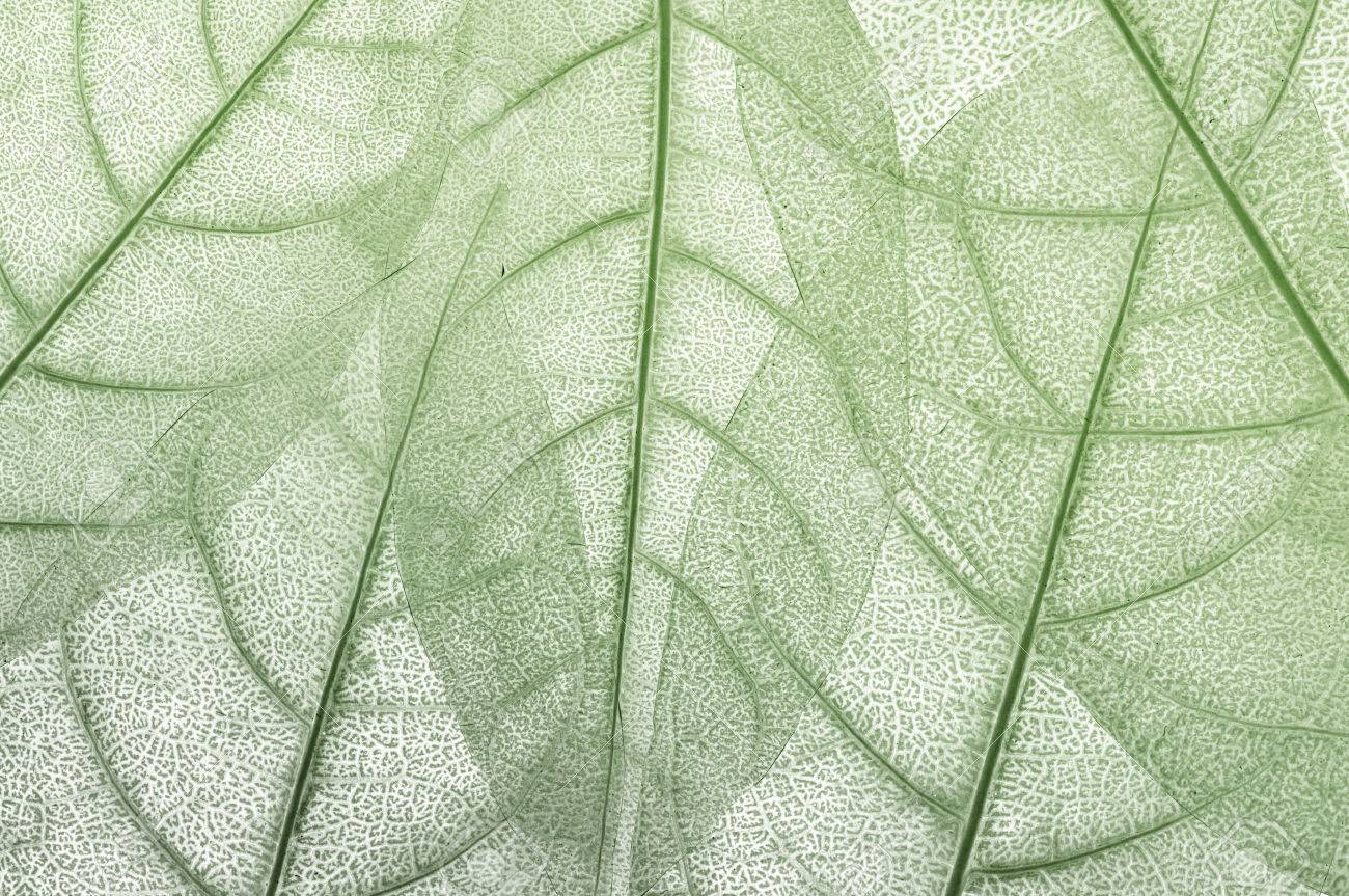 leave, leaf design abstract background - 46736187