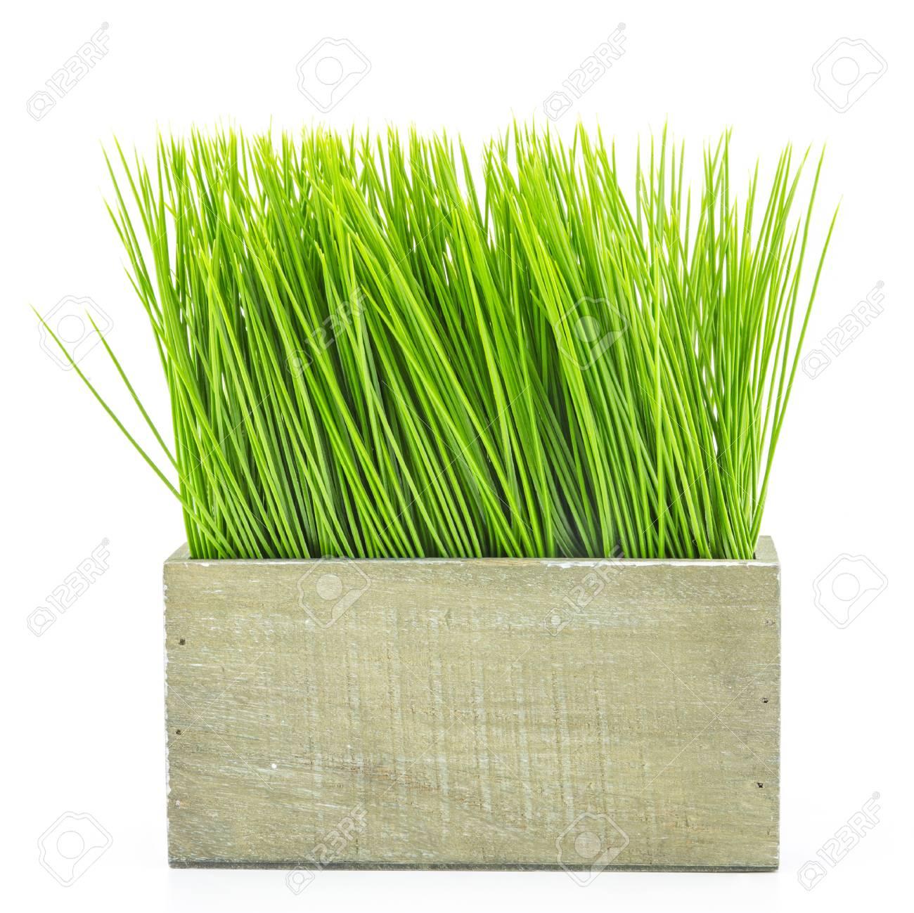 grünes gras in holz blumentopf auf weißem hintergrund lizenzfreie